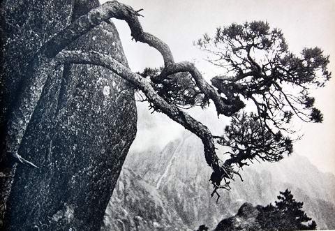 卢施福黄山摄影作品