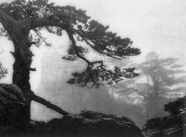 黄翔黄山摄影作品