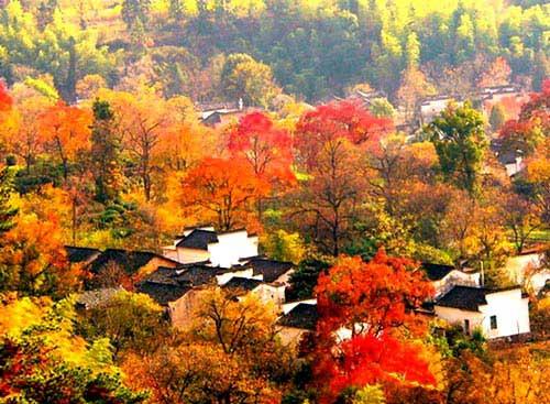 塔川婺源秋季黄山摄影团
