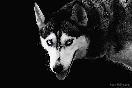 国外动物摄影作品:可爱的狗(多图)