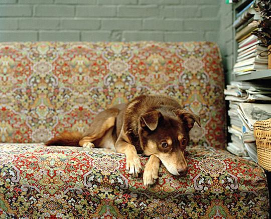 国外动物摄影作品:可爱的狗(多图)(3)