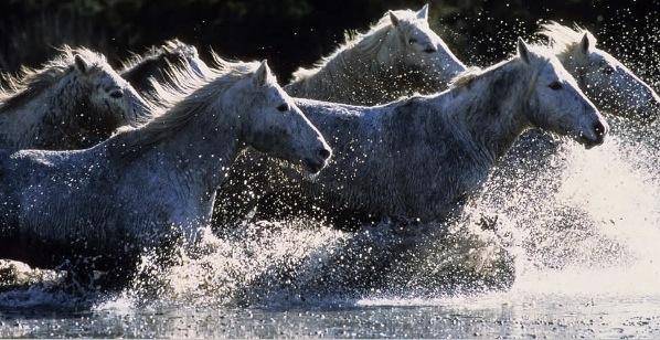 说明并纪录了地球上即将面临绝种及消失的野生动物