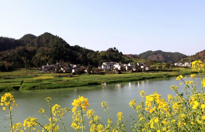 2012年3月24日歙县新安画廊油菜花情况.jpg