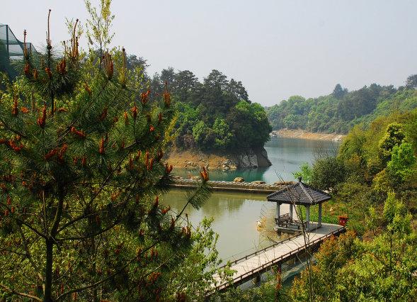 千岛湖旅游 千岛湖鸟岛-珍禽园.jpg