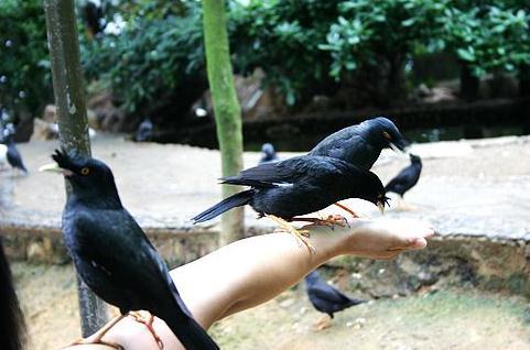 千岛湖鸟岛上喂鸟
