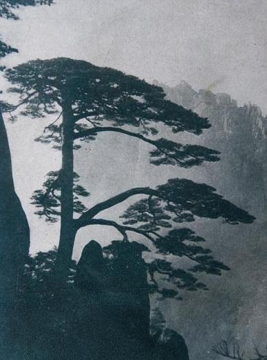 黄山迎客松介绍 黄山迎客松图片 1934年《黄山揽胜集》上的黄山迎客松.jpg