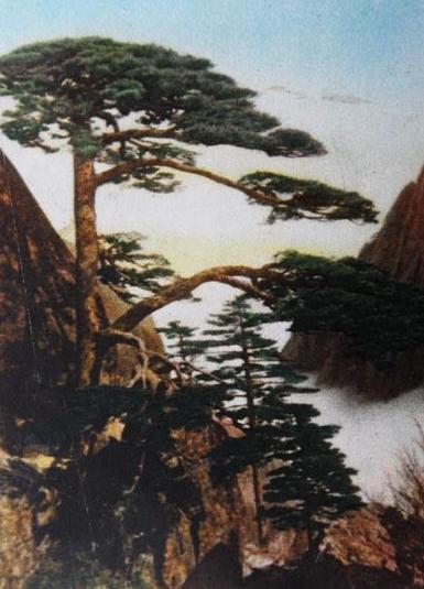 黄山迎客松介绍 黄山迎客松图片 1957年《黄山》上的黄山迎客松.jpg