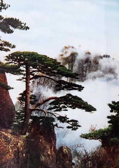 黄山迎客松介绍 黄山迎客松图片 1961年《黄山》上的黄山迎客松.jpg