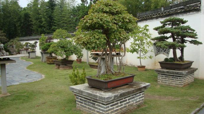 歙县鲍家花园-园中的盆景如云.jpg