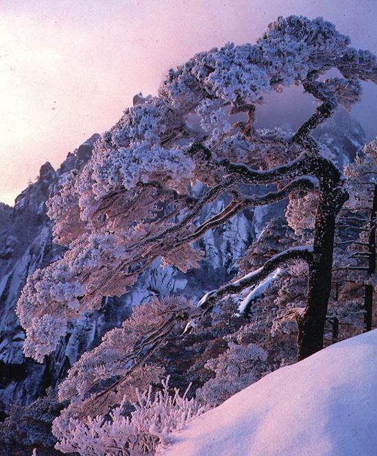 冬季黄山送客松雪景.jpg